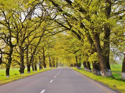 wonderful-Road-Tree-Landscape